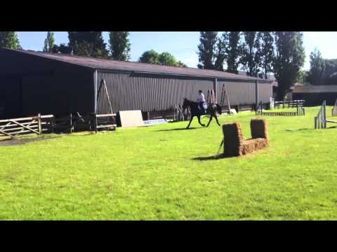 Owin - showjump course on grass