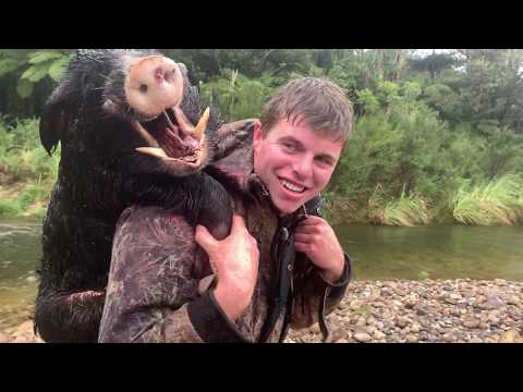 Boar Hunting New Zealand