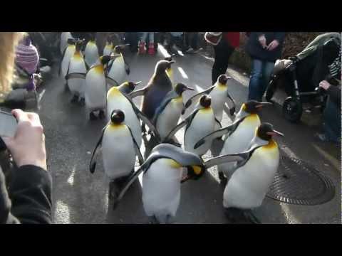 Penguin parade Zurich Zoo