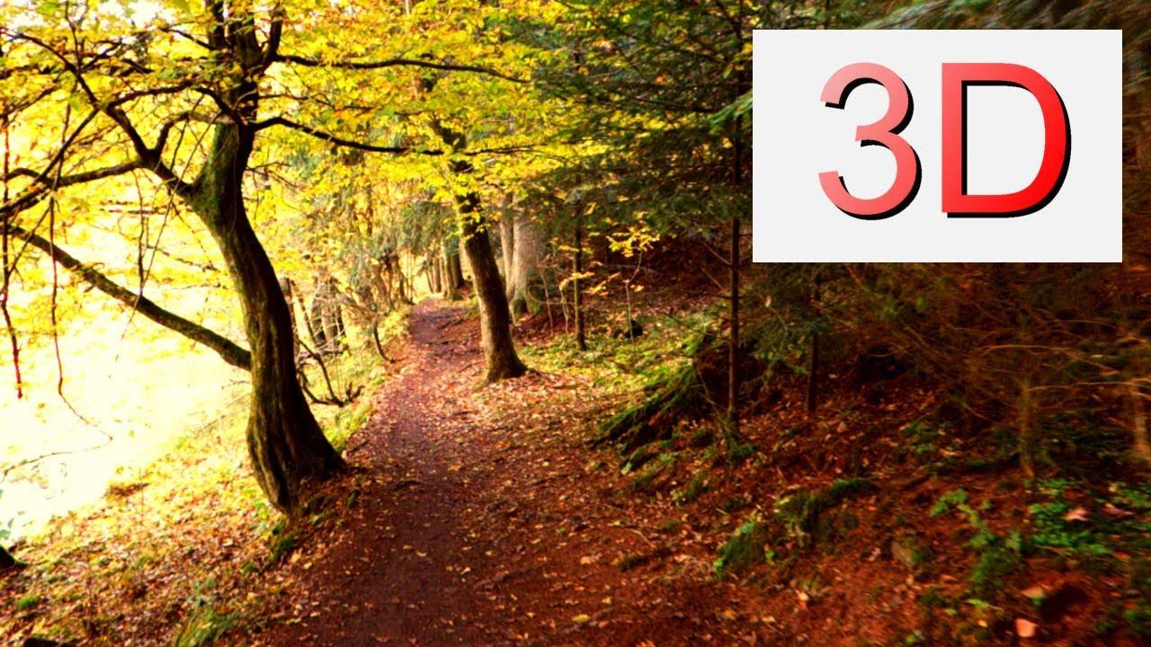 Fall Wallpaper 1440p Ultra Hd 3d Film September Forest Walk 4k Resolution