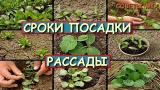 видео Когда сажать дыни на рассаду в 2018 году: лучшие дни по лунному календарю, сроки посадки семян в открытый грунт