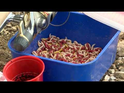 Тайните на платиките - част 2 / One day of bream fishing - part 2