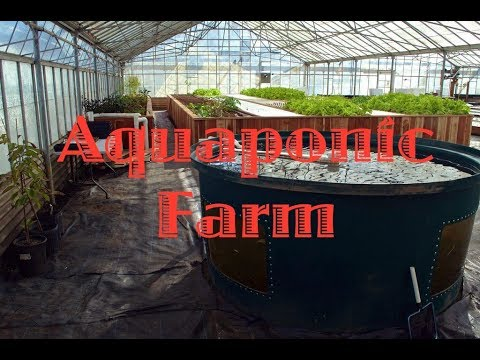 WaterWheel Aquaponic Farm - Toronto Canada