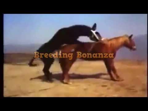 Breeding and Mating for educational purposes thumbnail