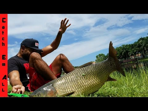 Canal Whale Bloopers LIVE FISHING!