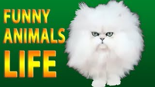 😻 Funniest Animals 🦁 - Try Not To Laugh 🤣 - Funny Animals Life 🐼