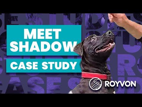 Shadow Case Study   Presa Canario Cross overcomes his fears