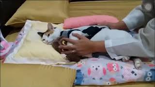 Funny Animals Dogs Cats Video - Funny Animals Funny Pranks Funny Fails 8