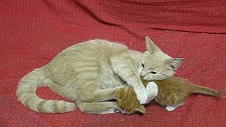За что кошка бьет своего котенка? / For what the cat beats its kitten?