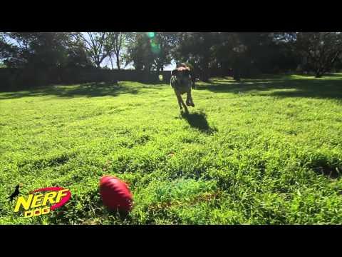 Nerf Dog - Hundespielzeuge