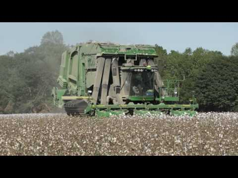 Spruell Farms High Cotton 2016