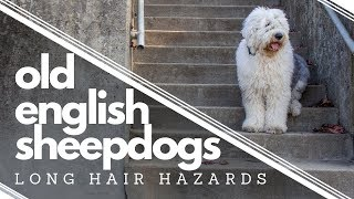 Long Hair Hazards┃Wish We Would Have Known BEFORE getting an Old English Sheepdog┃Ed&Mel