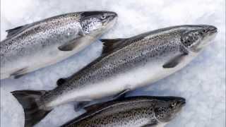 Рыба-Краснодар.Рф - рыба оптом в Краснодаре, купить рыбу оптом с доставкой(, 2015-09-28T17:59:42.000Z)