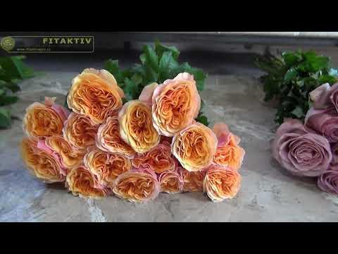 Вопрос: Сорт розы Lynda Bellingham какие отзывы, мнения?