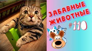 Приколы с Животными #110 / Смешные Животные 2020 / Приколы / Приколы про Животных / Лучшие Приколы