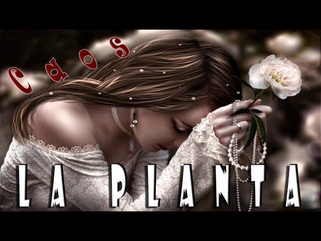 La Planta Caos