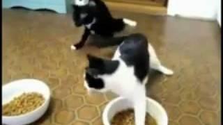 Прикол.Коты отходняк.