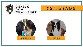 Genius dog challenge  Rico & Whisky