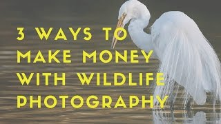 3 ways to make money with wildlife photography ep 1