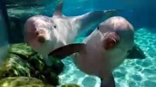 Música de relajación - Delfines y ballenas