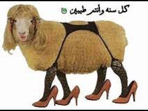 خروف العيد مضحك جدا