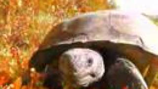 Turtle trippin on Acid looking for some HOT SEX