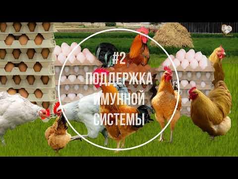 Природный мел для кур