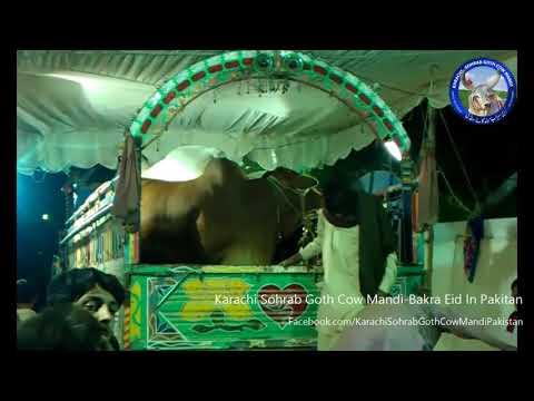 Capital Nawab Ka King Of Balochistan Abid Town Karachi Sohrab Goth Cow Mandi
