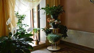 Комнатные растения.   Замечательная подставка под цветы  и растения! .