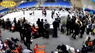 Выставка собак, Локомотив, Харківський МО, Природа, Харьков, январь, 2018, часть 5