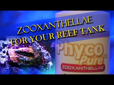 Bring back a bleached out coral - Phyco Pure Zooxanthellae - AlgaGen