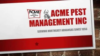 Pest Control Jonesboro AR - ACME PEST INC