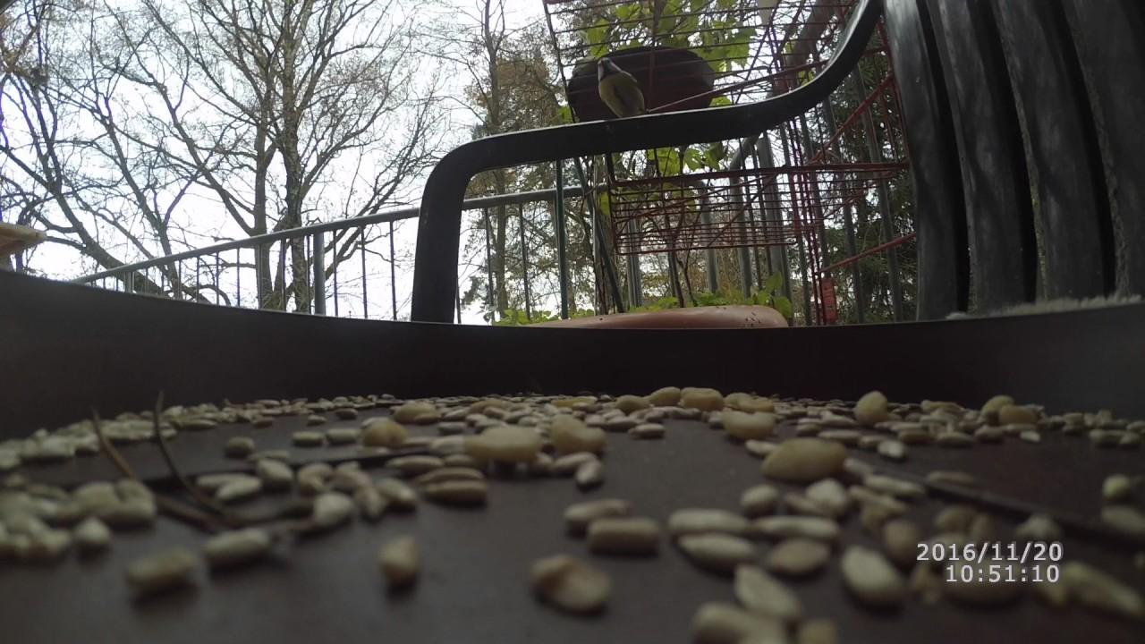 Vogelfütterung Auf Dem Balkon