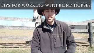 Blind Horses- Should they be worked with any differently?