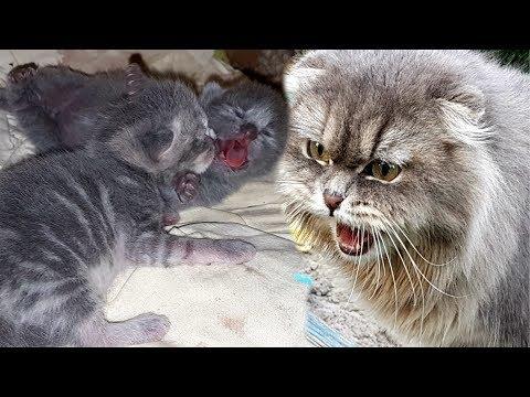 VLOG Кошка защищает котят притворяясь ласковой / Галчата тв