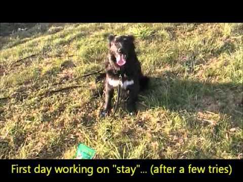 Nebraska Border Collie Rescue - Geneva (Genny)