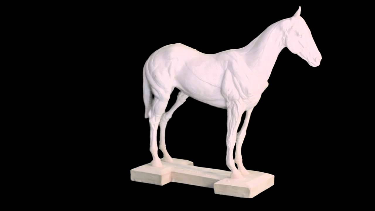 Horse Anatomy Model - Skeletal Structure of Horse - Muscle Structure ...