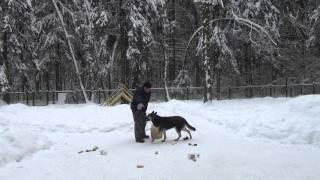 """Раскладка """"зоны лакомства"""" собакой-инструктором Лушей."""