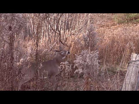 Hunting Whitetails In Nebraska's Sandhills - DDH TV Flashback