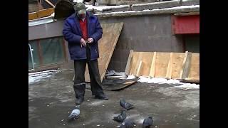 Кормление голубей 10