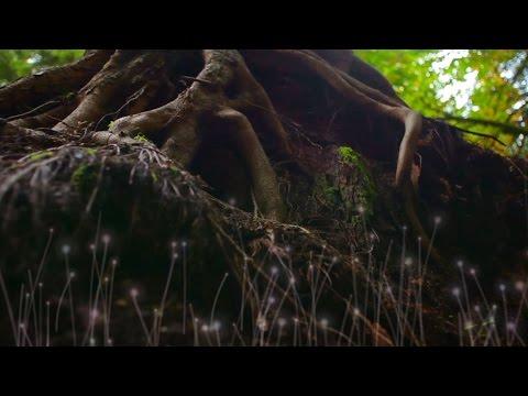 How Trees Help Create Healthy Soil