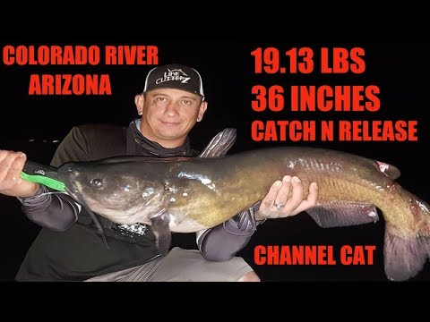 Channel Catfish I Got State Record For AZ (Catch N Release) -Read Description-