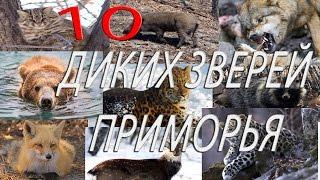 Топ 10 диких животных  Приморья.