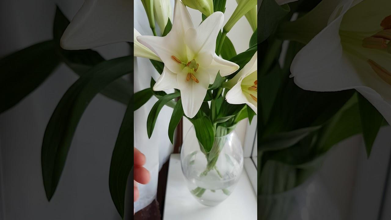 Allergy flower sneezing youtube allergy flower sneezing izmirmasajfo