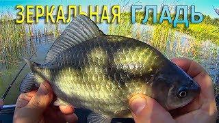 КАРАСЬ Рыбалка на ПОПЛАВОК Зеркальная гладь