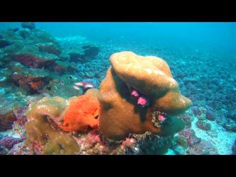X7neo Deep Dive Cocos Island