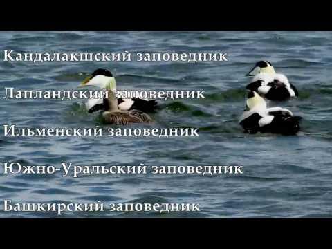 Буктрейлер Самые красивые заповедники России