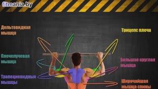 Смотреть видео какие мышцы работают при подтягивании видео