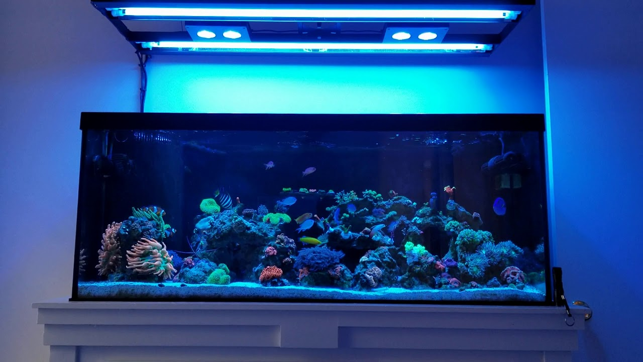 #BRStvReacts 3 month old aquarium 6/10/20