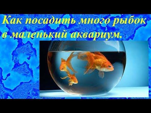 Вопрос: Каких рыбок посадить в палюдариум, где объем воды – литров 5?